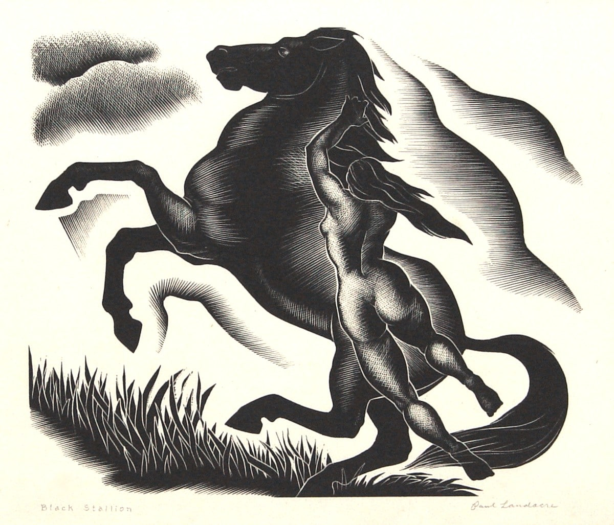 LANDACRE_Black-Stallion_for_sale