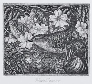 Robin Tanner: Wren and Primroses. Signed in pencil.