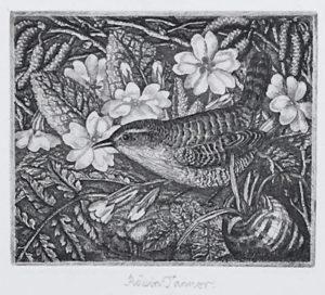 Robin TANNER - Wren and Primroses